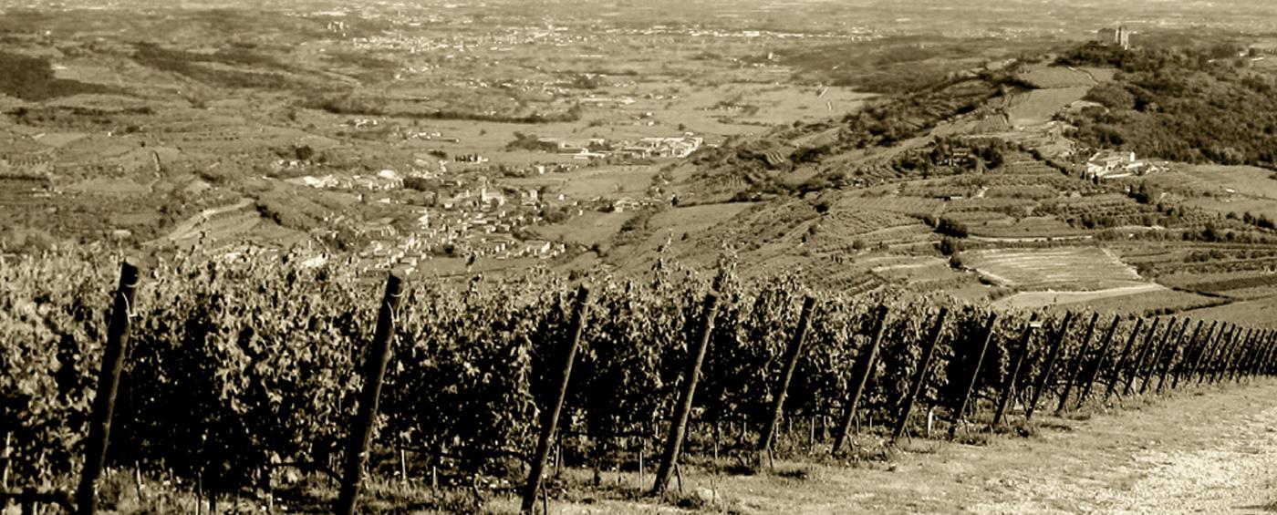 villa-canestrari-vigne