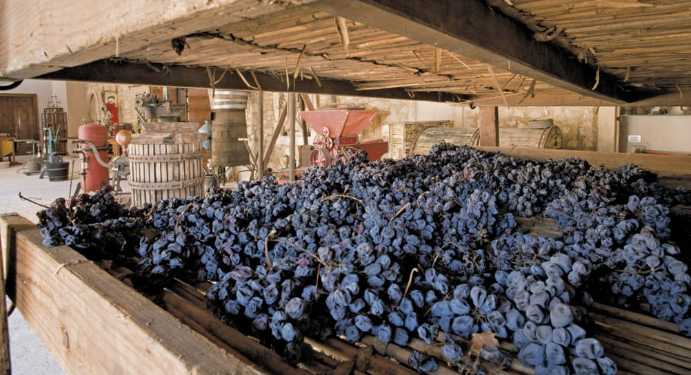Villa Canestrari - appassimento dell'uva