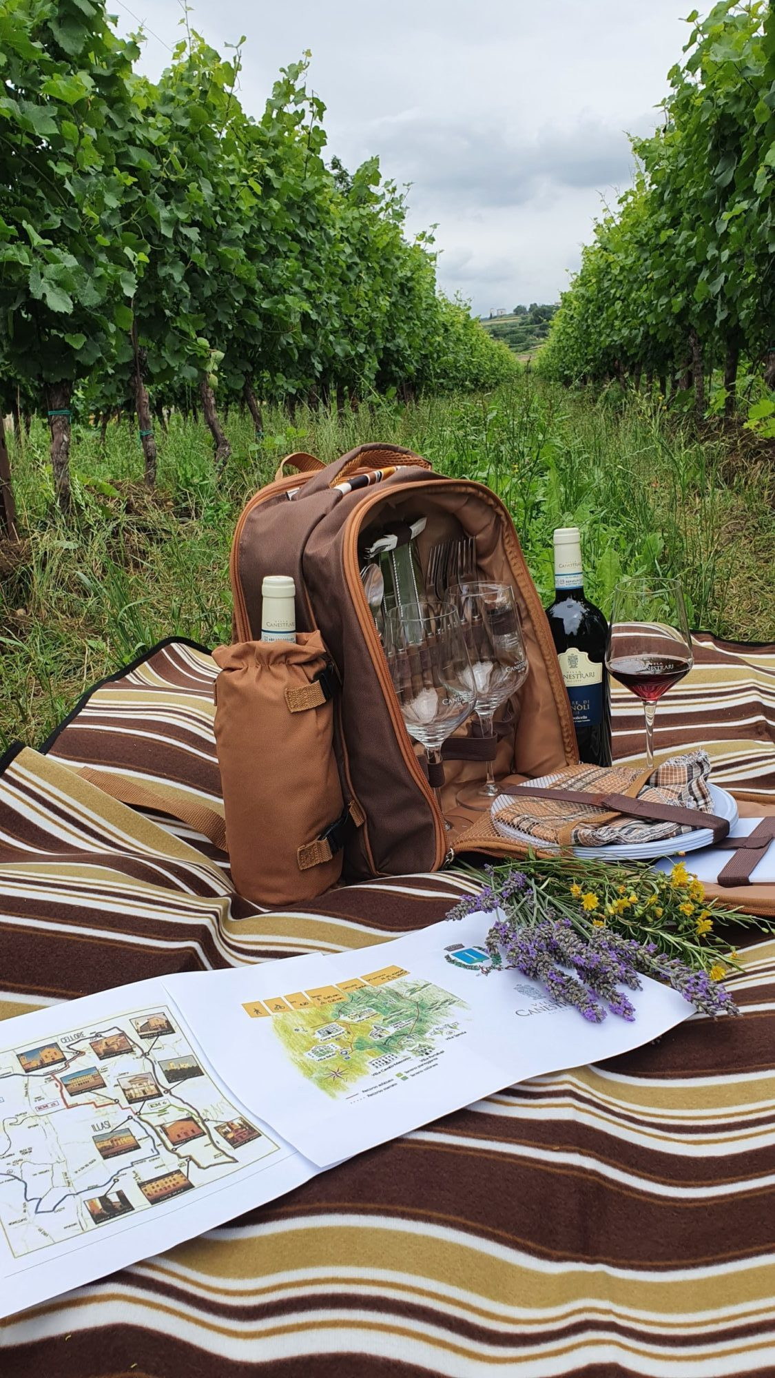 Trekking & Picnic in the Vineyards – Summer 2020